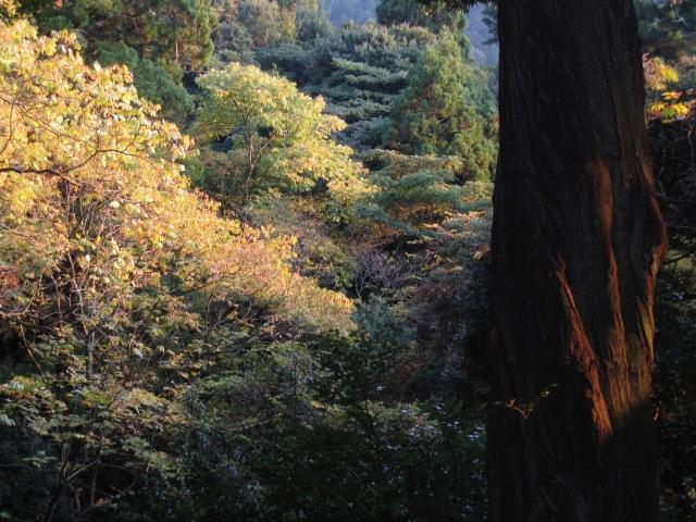 Forêt Nara