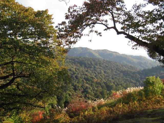 Montagne forêt