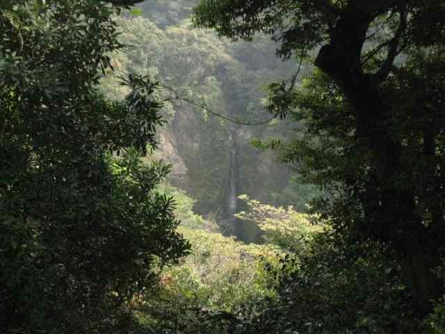 Eau et forêt Kagoshima